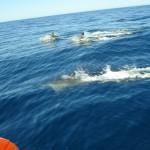 Delphin watching